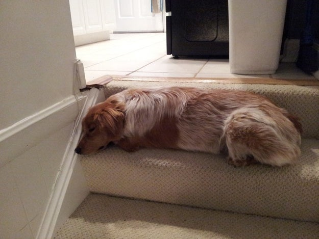 """""""This step is the perfect place for a nap. So what if it's right next to the kitchen, from which I've been banned?"""""""