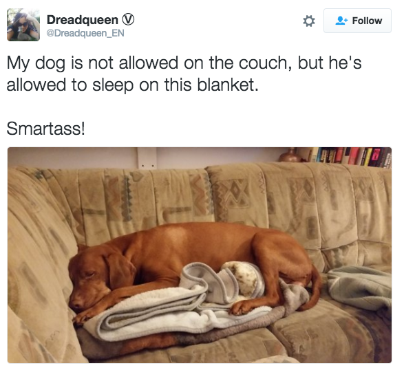 """""""Meu cachorro não pode subir no sofá, mas pode dormir no cobertor dele.Espertinho!"""""""