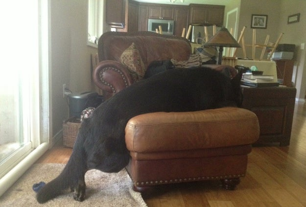"""""""I'm not on the ottoman. One of my paws is still on the floor, see?"""""""