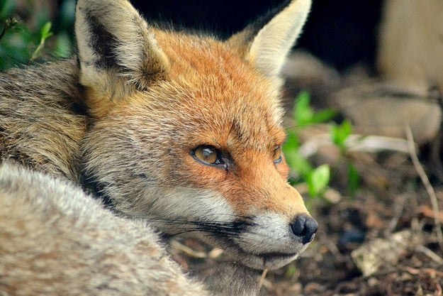 17 Foxes Who Are So You When You're Over Everyone's Shit