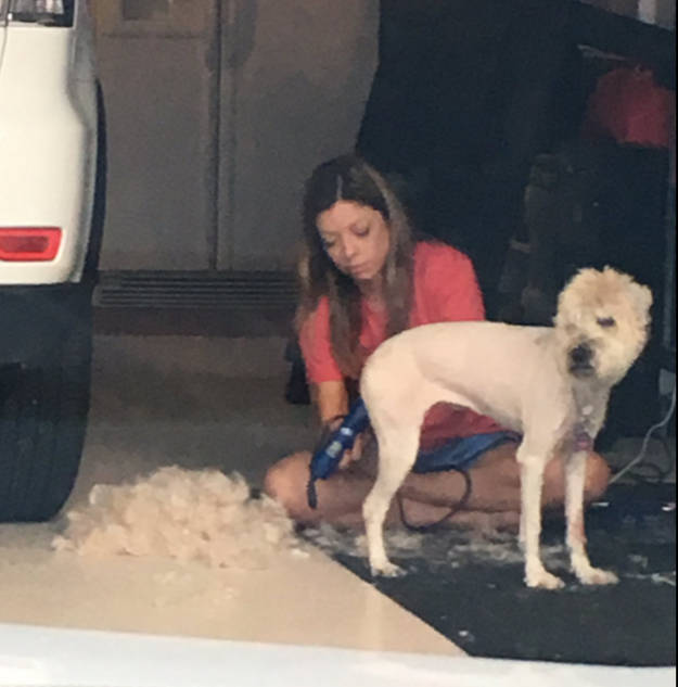 Mackenzie Neel, the daughter of the family, told BuzzFeed News that she pulled up from school only to see this — her mom removing all of Abbie's fur.