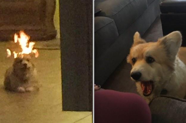 dog looking in mirror. dog looking in mirror -