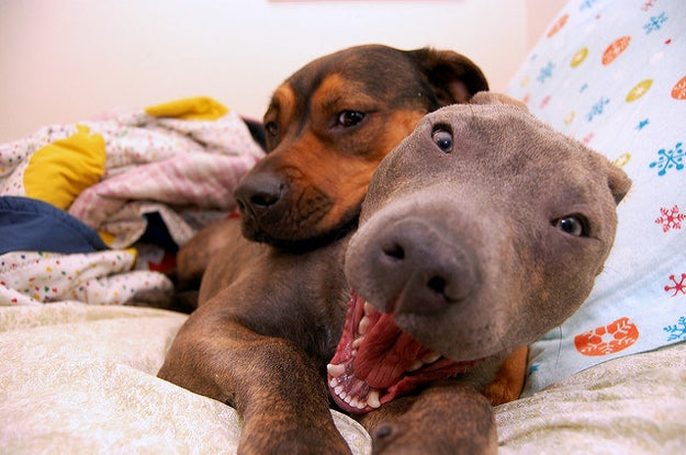 Ok, first look at how shocked this pup is that his friend is using him as a pillow. SHOCKED!