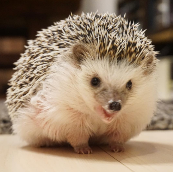 Omg now there's a smiley hedgie! If this doesn't inspire you to smile, idk what will.