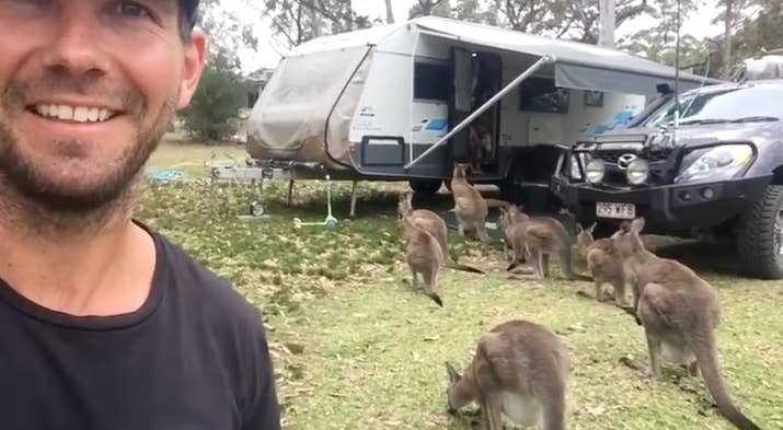 But the next day a mob of more than a dozen 'roos parked themselves outside the front of the Lorrimer's caravan.