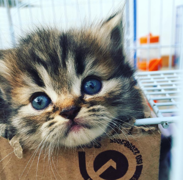 This kitten who has the most kissable, fluffiest face around.