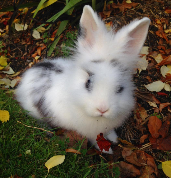 This tiny dude who is taking his fluff out for a frolicking adventure.