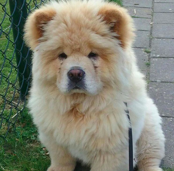 And this ball of fuzz who might actually be a friggen' BEAR.
