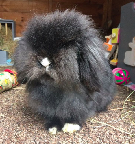 This slightly grouchy ball of fuzz.