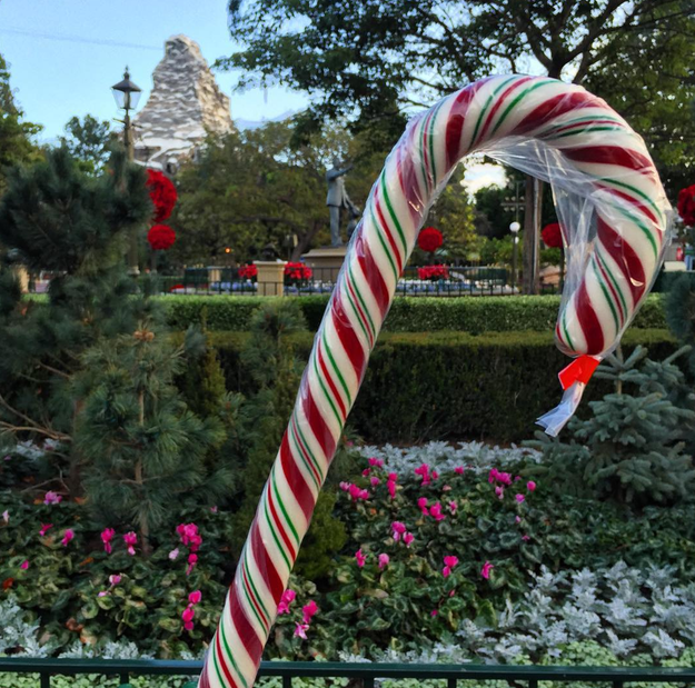 They also bring back their famous handmade candy canes.