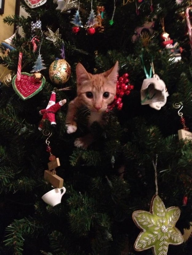 """""""Oh. I didn't realize you were home. I was simply...inspecting the ornaments."""""""