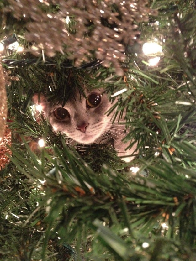 """""""I'm just making sure there aren't any presents hiding in here."""""""