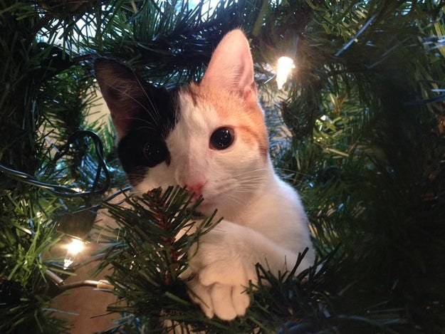"""""""You have to admit that this tree really makes my fur glisten."""""""