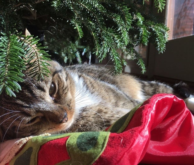 """""""I'm just going to chill out here. Wake me up when Santa arrives."""""""