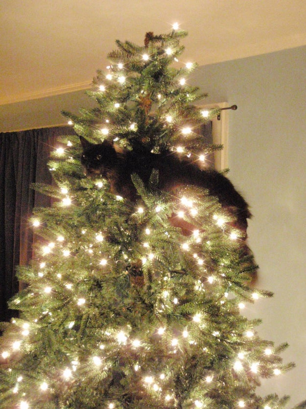 """""""I approve of this sparkly, wobbly cat tree."""""""