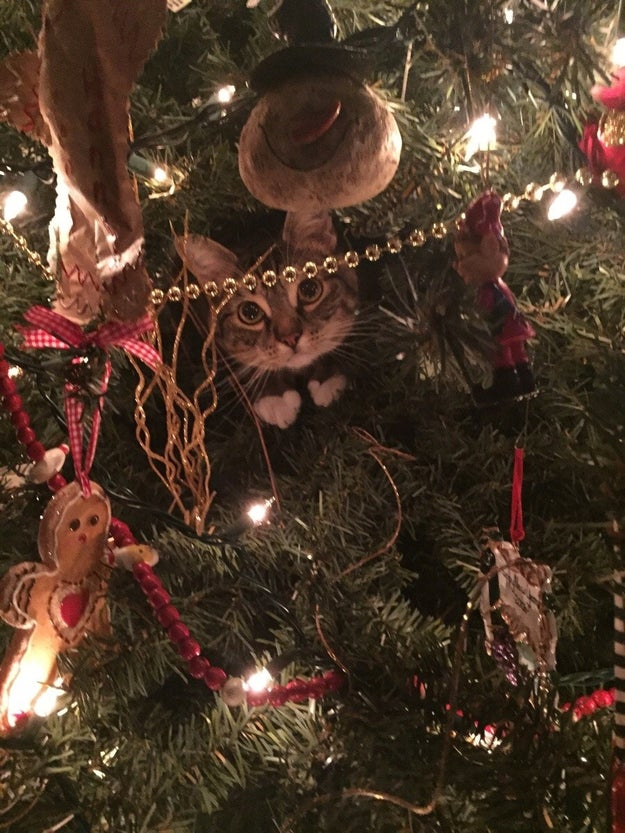 """""""I'm a little Christmas surprise for you to find."""""""