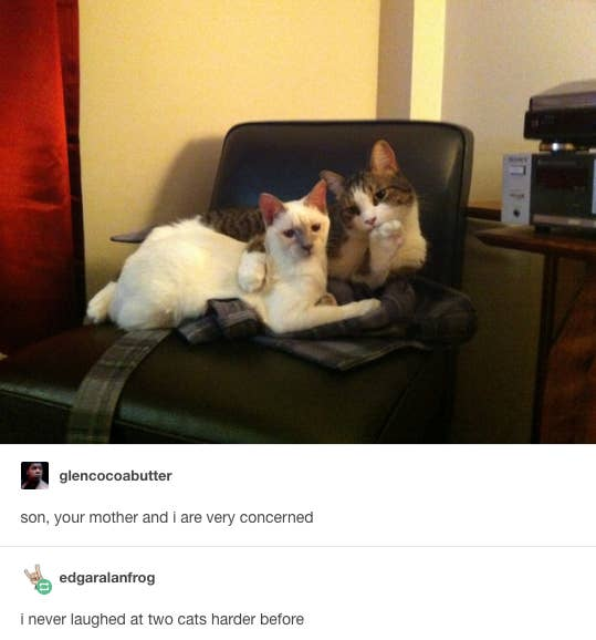 Fucking Funny Tumblr Posts About Cats - 32 hilarious tumblr posts about animals that will make your day so much better