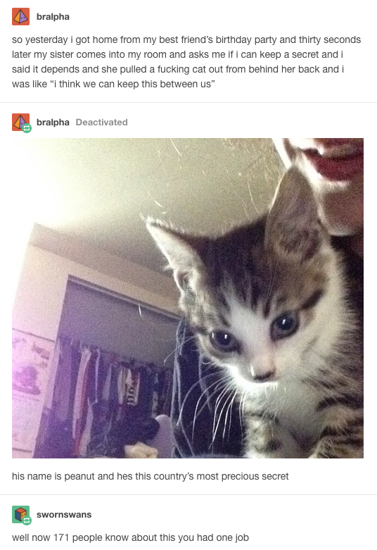 12 Times Cats On Tumblr Were A Gift To The Internet-4571