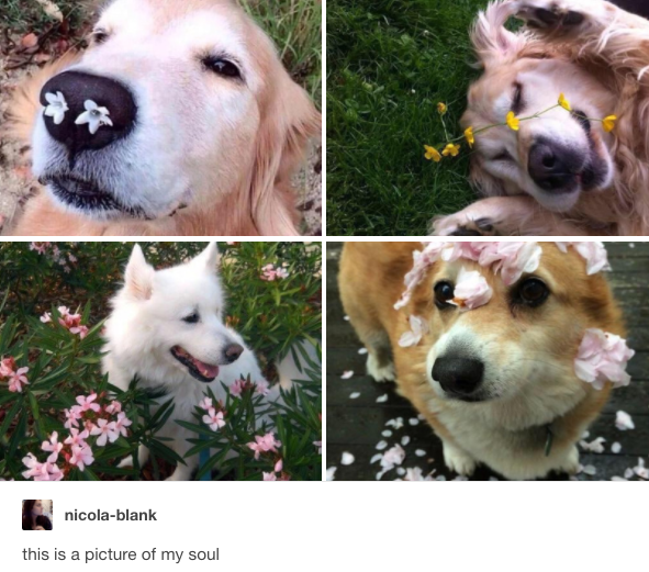 A virágok: