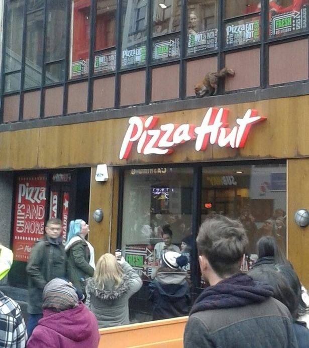 And this fox, which is attempting to break into a Glasgow branch of Pizza Hut.