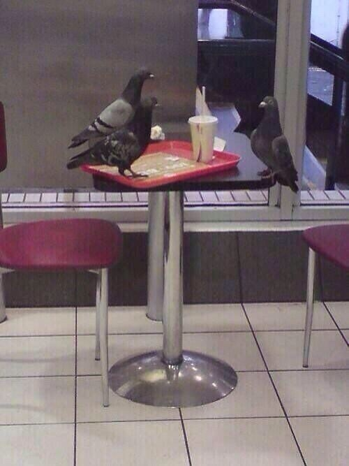 These pigeons, who appear to be holding a job interview.