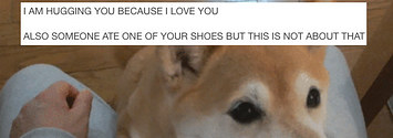 Literally Just A Bunch Of Funny Tumblr Posts About Dogs