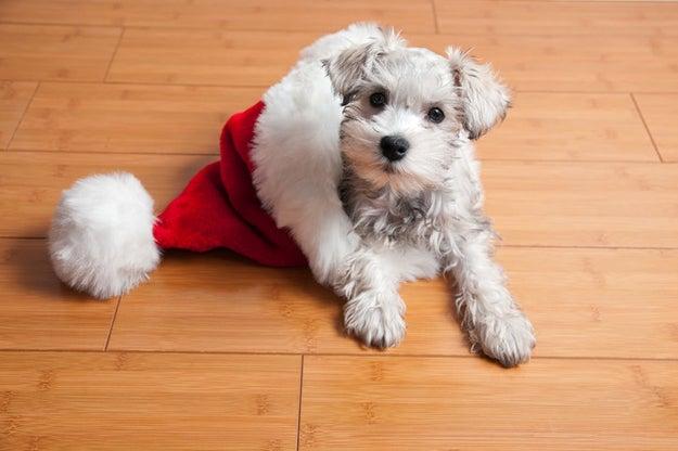 Este cachorrito sabe que nos espera una época mucho más alegre.