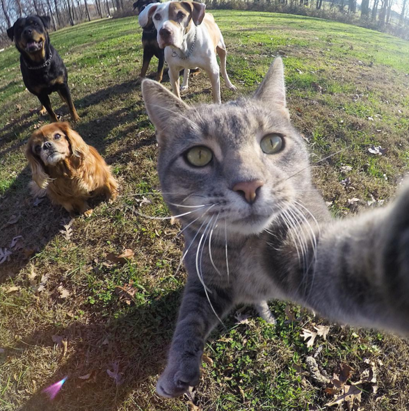 Manny the Selfie Cat's epic photos.