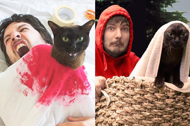 This Guy Re Creates Famous Movie Scenes With His Cats And It S Hilarious
