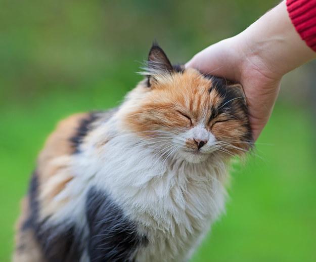 cat behaviour specialist uk