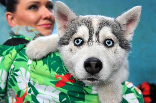 Nur echte Hundemenschen schaffen mindestens 15/20 in diesem Quiz