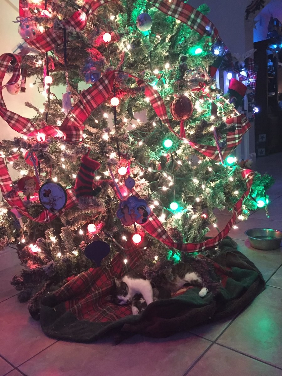 This Teen Found Her Cat Giving Birth Under The Christmas Tree