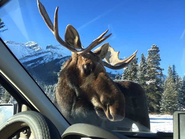 CJ Malan and his wife Theresa had headed out to Peter Lougheed Provincial Park, just south of their home in Banff National Park.