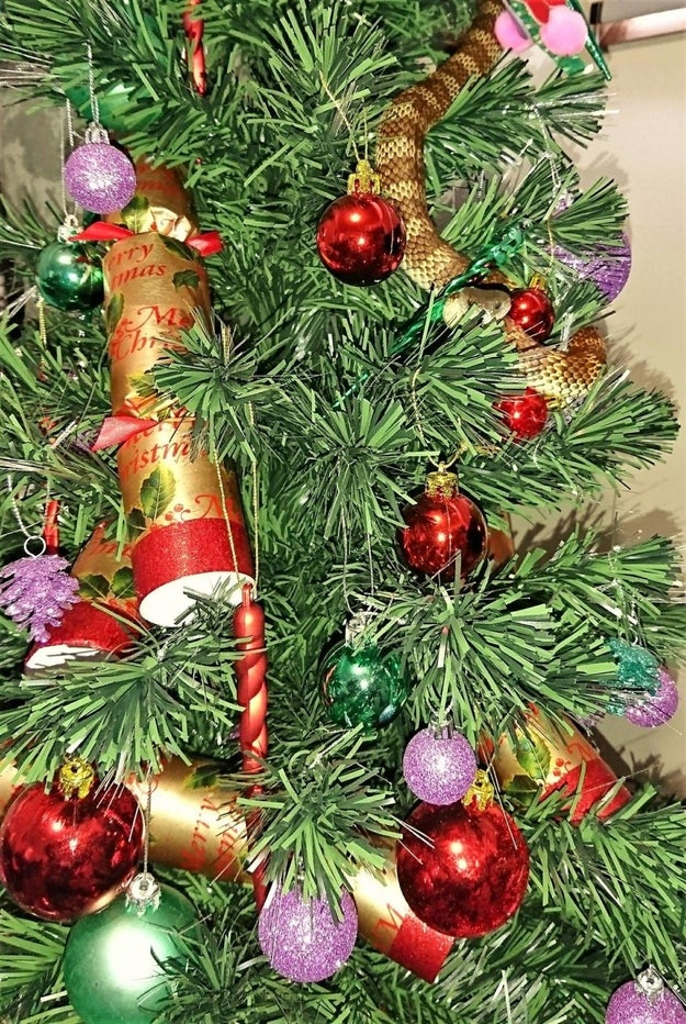 There was the snake who decided he'd blend in with the garland on a Christmas tree.