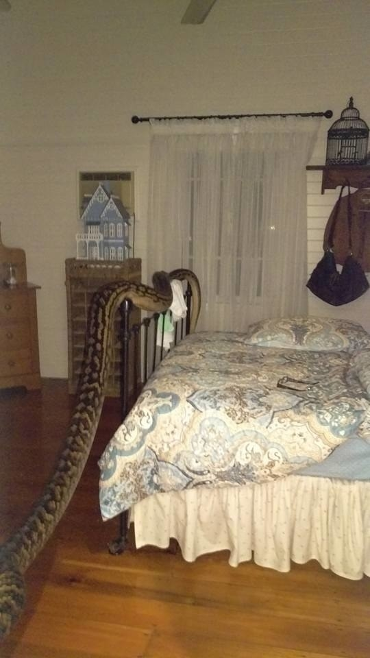But also real-life snakes HAD A REALLY GREAT YEAR. They were in everybody's houses.* Like this 16-foot python that slid on into this woman's bedroom in the middle of the night.