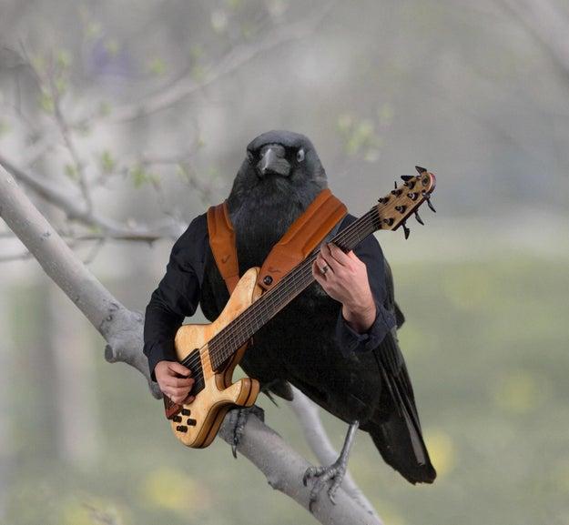 Nada que ver aquí... sólo un cuervo echando el palomazo.