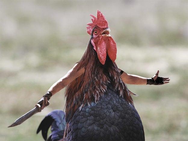 ¿Te vas a poner gallo?