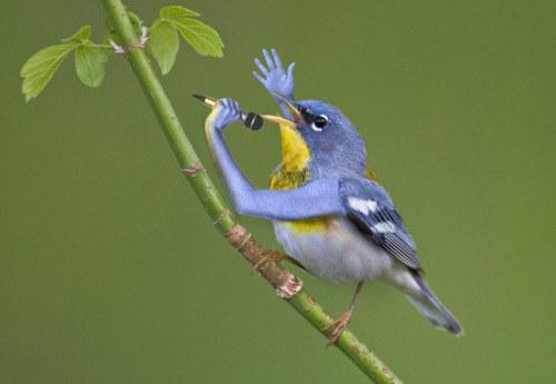 Está cantando una de Wings.