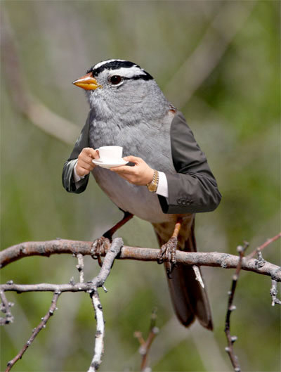 Si George Clooney fuera un ave...
