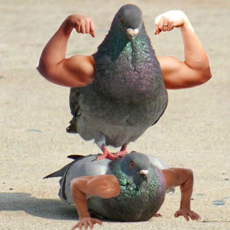 Hola. Aquí hay dos palomas mamadas.