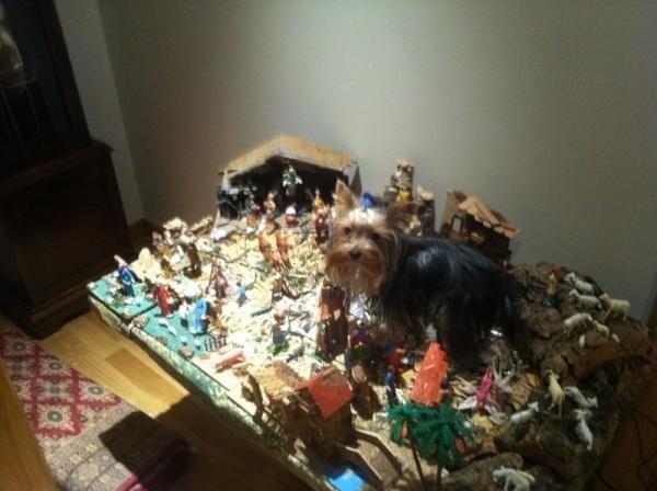 Y este perro que no entiende la Navidad ni nada de lo que está pasando a su alrededor.