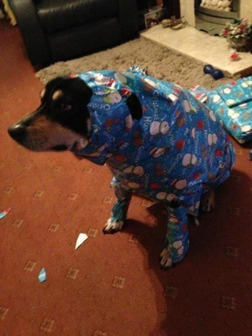 Y esta persona que entendió regular lo de envolver los regalos navideños.