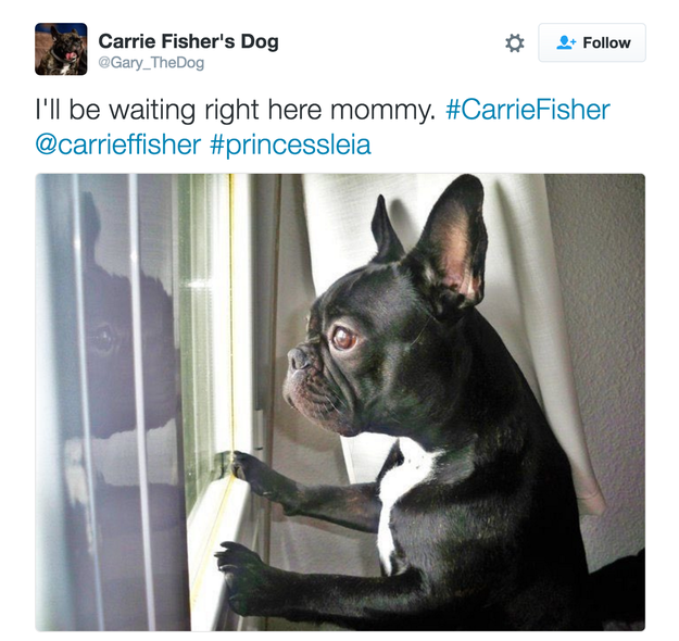 Following the news of Carrie Fisher's death on Tuesday, a lot of people are sharing a heartbreaking tweet that was posted earlier on her dog's alleged Twitter account: