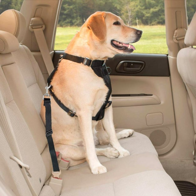 Keep your pooch safe in the back with this adjustable seatbelt harness ($5.99).