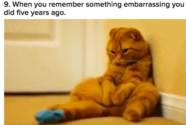 "17 Cat GIFs That Will Make You Say ""Me As A Cat"""