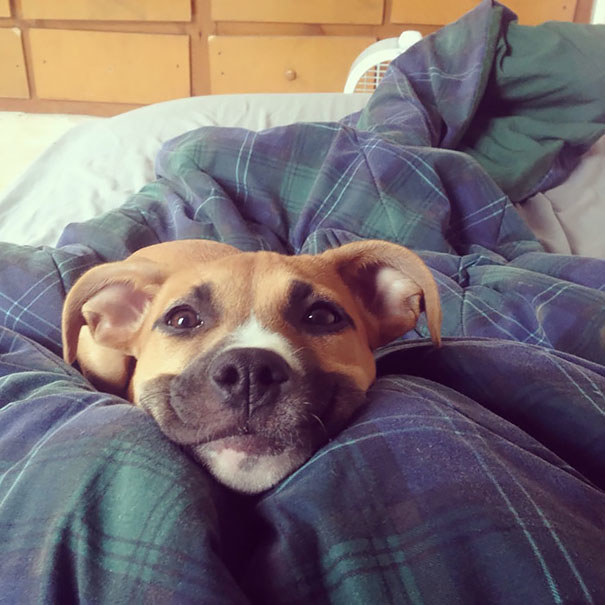 This dog who woke up believing it would be a good day.