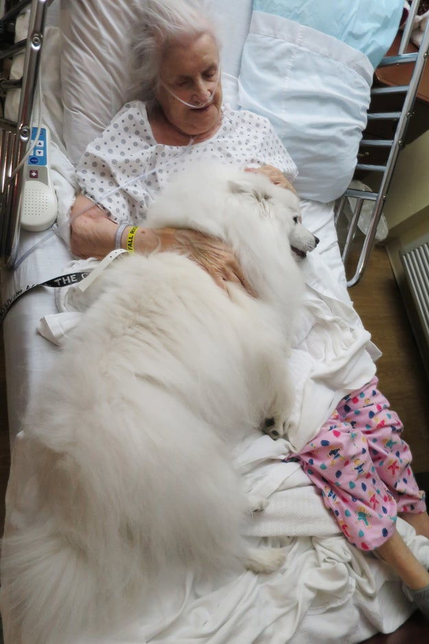 This dog who willingly provided comfort to his human's mother in the hospital.