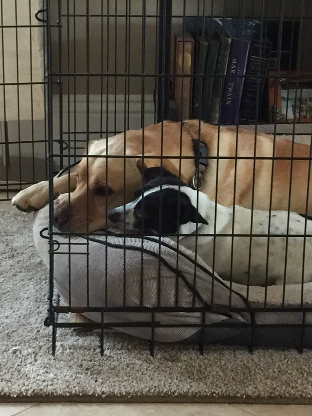 These precious souls who had no trouble moving in together.