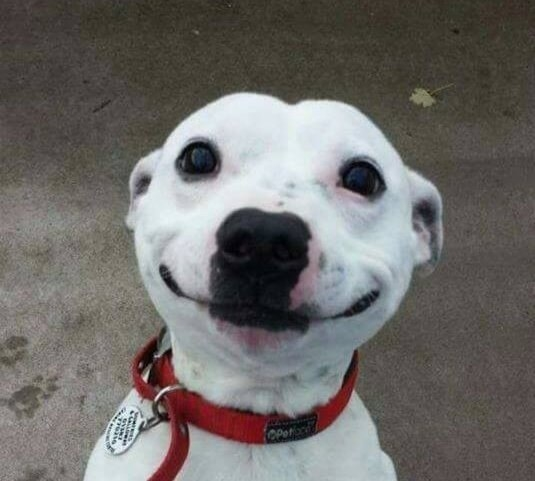 This dog who has nothing but smiles for you.