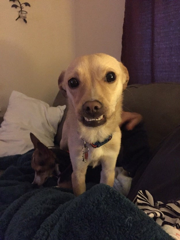 This dog's beautiful grin.